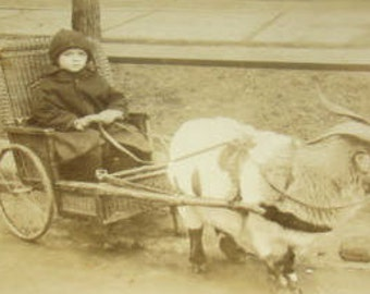 LAST CHANCE SALE Cute rppc of Goat Pulling Child In a Chair