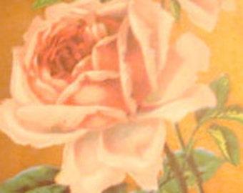 Pretty Vintage Floral Postcard (Pink Roses)