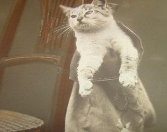 Nice Vintage/Antique Cat In Purse RPPC #1