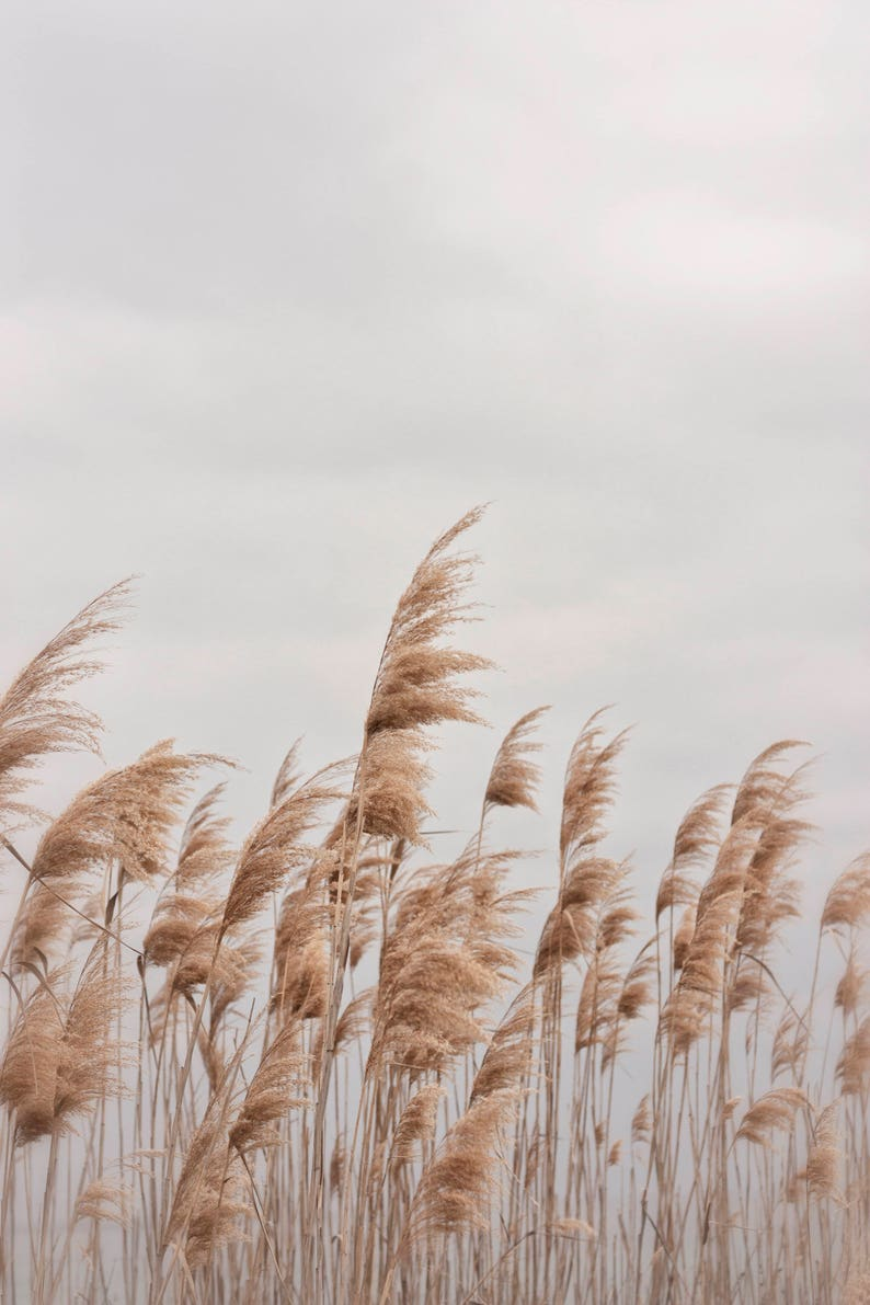 Beach Photography Beach Grass Wall Art Digital Print image 0