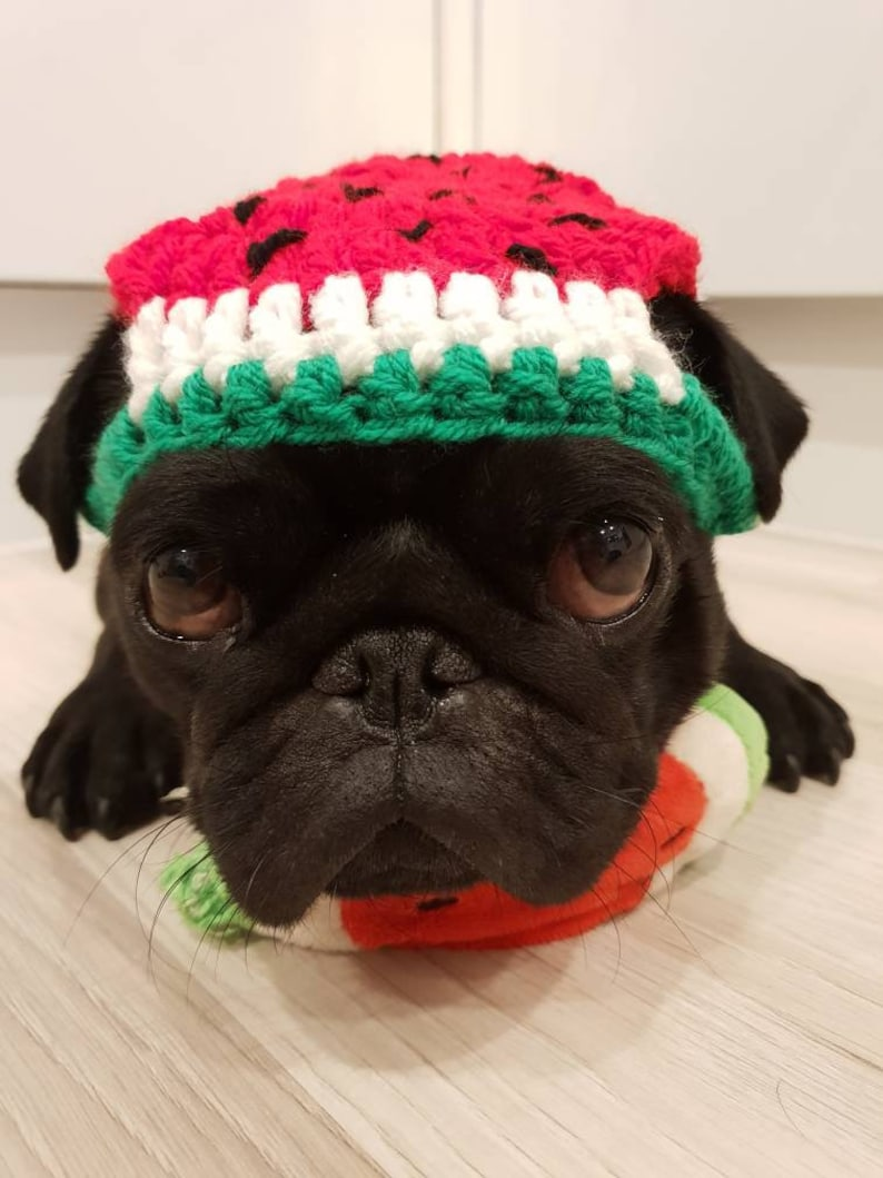 9421da05eec One in a Melon dog Hat hats for dogs crochet hat for dogs