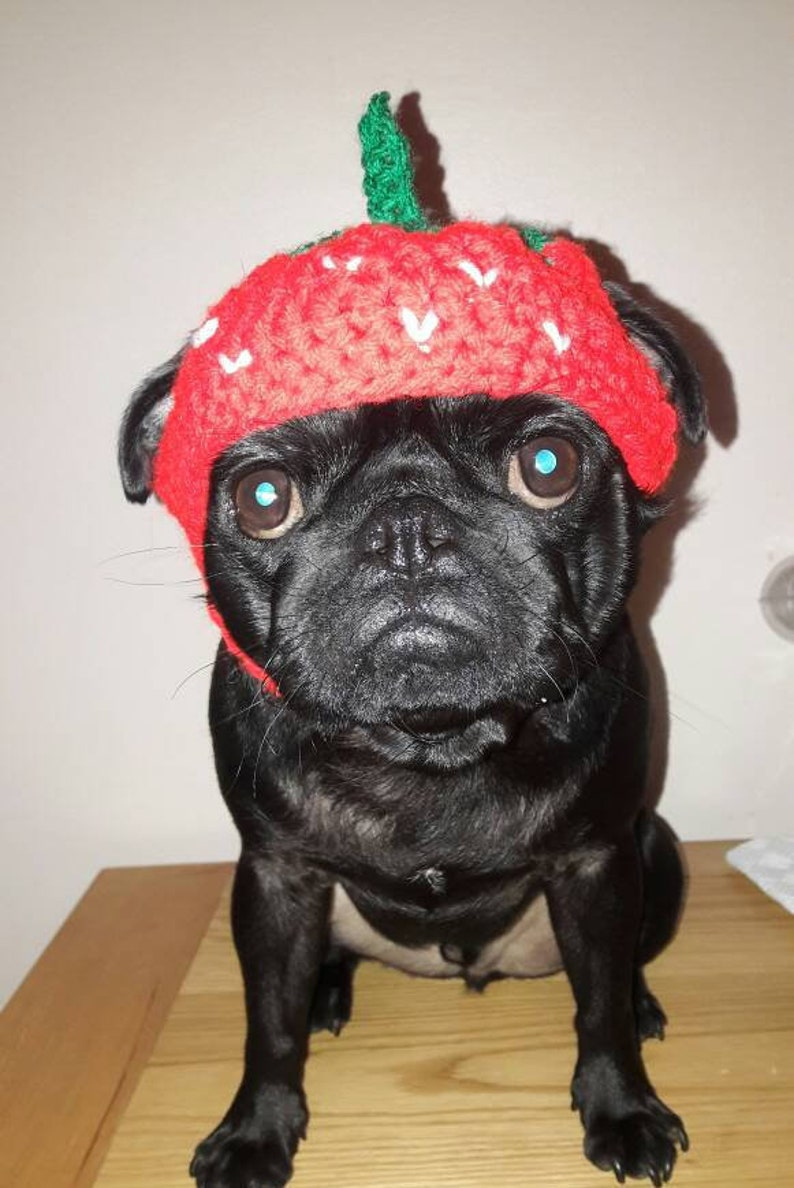 a5dd0bb26c8 Crochet strawberry dog hat strawberry pug hat hats for dogs