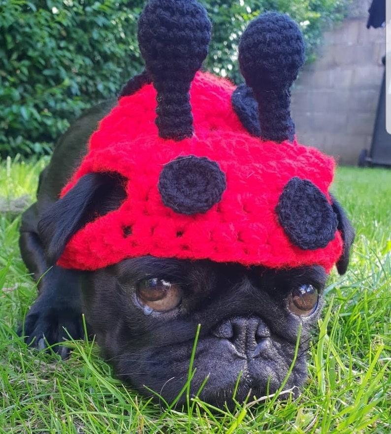 279dc2f6115 Ladybug dog Hat Crochet ladybird hat ladybug pug hat hats