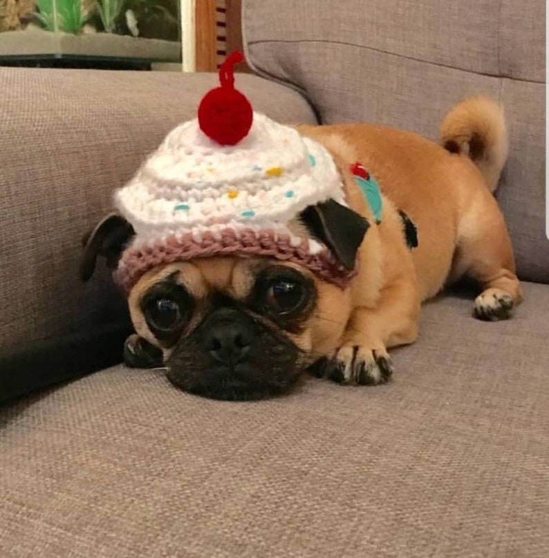 Crochet cupcake dog hat cupcake hat hats for dogs hats for  7258c45a7e4