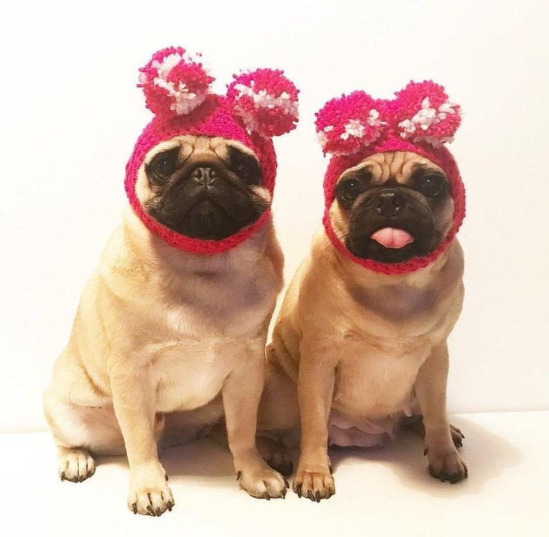 0f614f003e8 Crochet PomPom dog Hat Crochet hat pompom pug hat hats for
