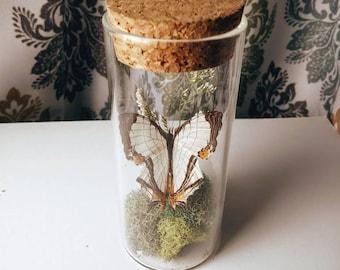 Miniature Butterfly Jar