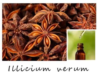 ANISE ESSENTIAL OIL, Anise Star Essential Oil, Illicium verum, 100% Pure Therapeutic Essential Oil