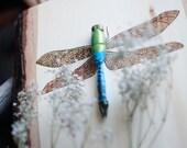 DISCONTINUED Blue Green Darner Dragonfly Specimen on Wood
