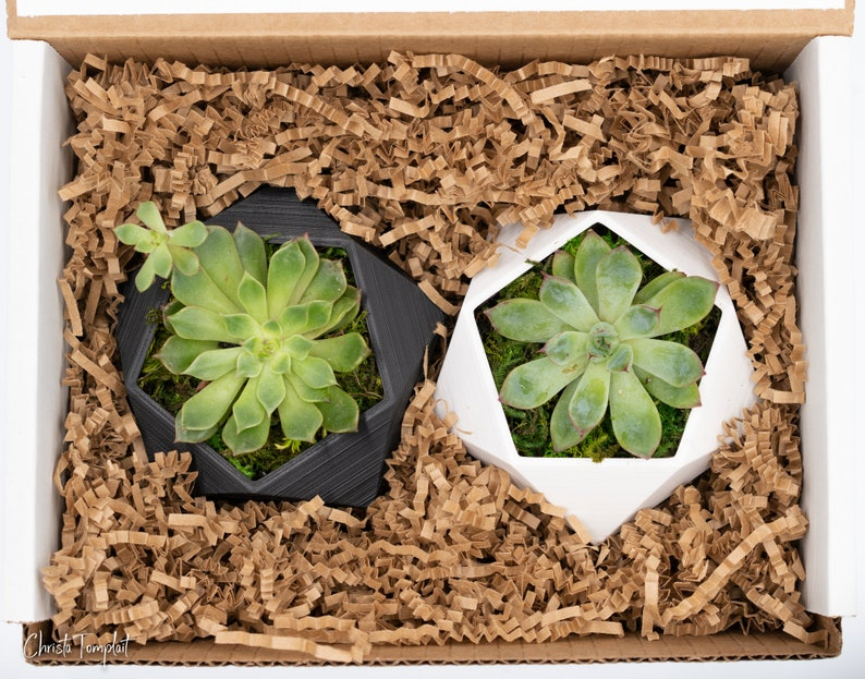 30th Birthday Gift  Succulent Gift Box  Gifts for her  Gift Box for Friends  Birthday Gift Box  Succulent  Gift Box with Candle  SB30