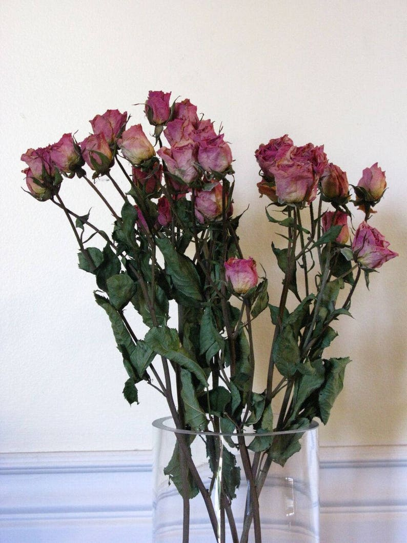 Pink Dried Spray Roses