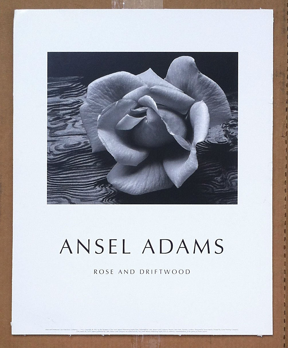Ansel Adams Rose and Driftwood poster 16 X 20