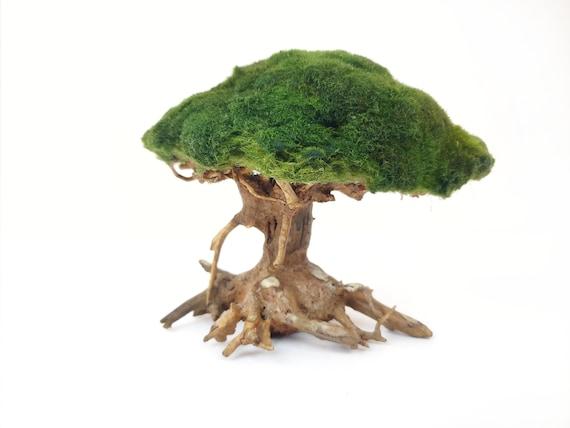 Marimo Moss Ball Driftwood Bonsai Tree For Aquarium Terrarium Etsy