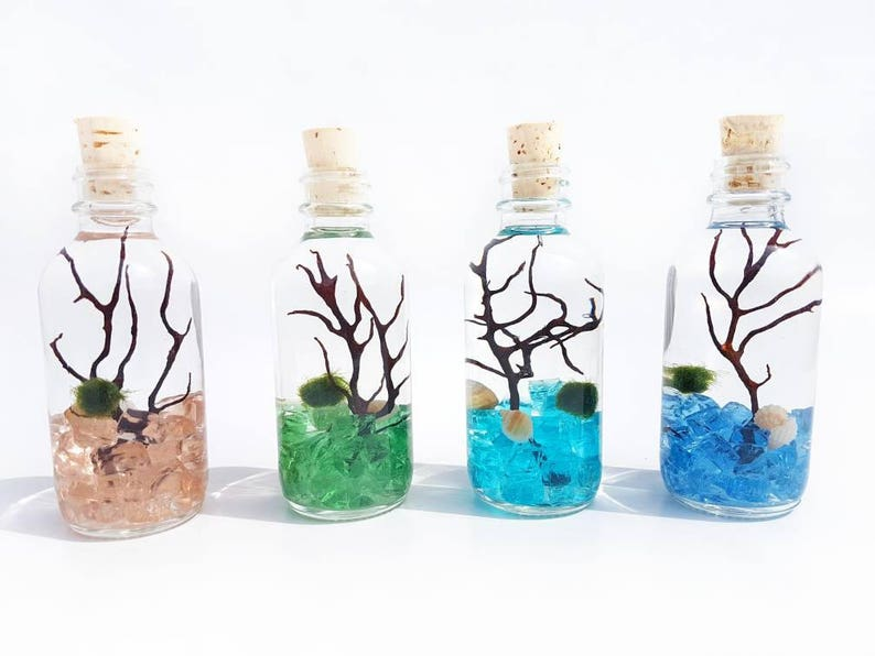 Nano Marimo Moss Ball Terrarium Bottle With Cork Crushed Glass Etsy