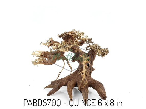 Small Aquarium Driftwood Bonsai Tree Quince Etsy