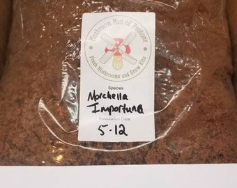Morel Mushrooms (M. Importuna) Grow Kit, FREE Shipping with Biodegradable Bag