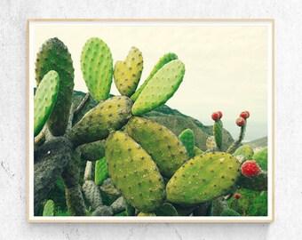 Desert Cactus Photo Print, Boho Cacti Wall Art, Large Poster, Contemporary Photography, Modern Minimalist, Printable Digital Download