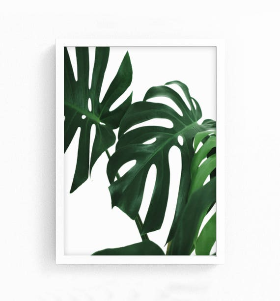 graphic relating to Palm Leaf Printable known as Monstera Leaf Printable Artwork, Palm Leaf Print, Tropical Print Wall Artwork, Monstera Print, Scandi Printable, Scandi Print, Botanical Prints