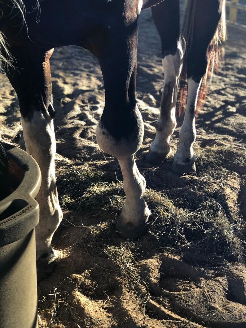 Ombre/'s Rescue Horsehair Raku