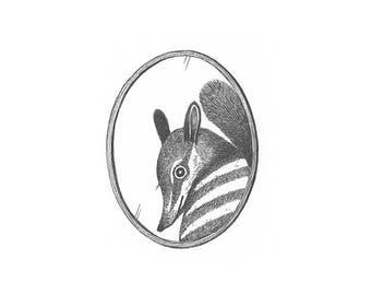 Original Illustration - Portrait Miniature Series - A Shy Numbat - Original Ink Artwork