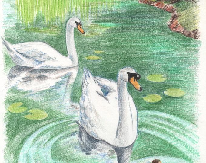 Swans from Killarney