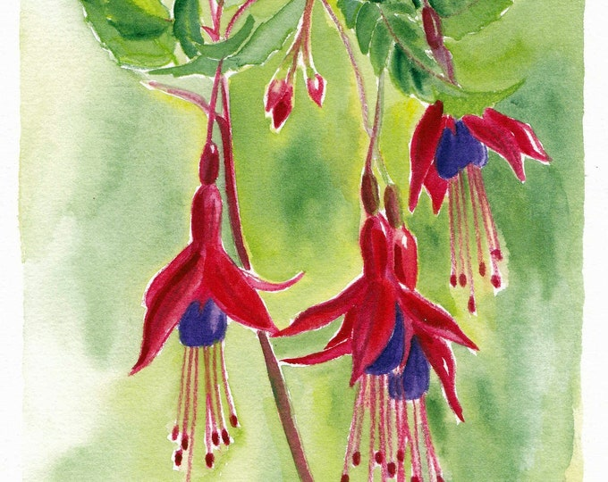 Fuchsia the tear of God
