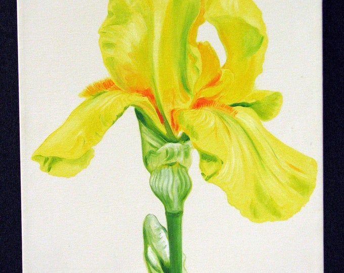 Yellow Iris oil painting