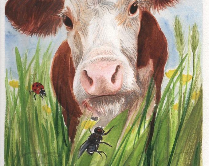 The Irish Cow