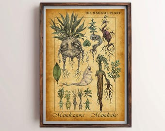Harry Potter Mandrake, Mandrake Plant, Mandragora Print, Herbology, Mandrake Print, Mandrake Art, Harry Potter Poster, Harry Potter Print