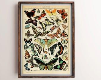 Butterflies Vintage Print, Butterflies Poster, Antique Butterflies Print, Butterfly Art, Home Decor, Home Art, Kitchen Wall Art, Kitchen Art