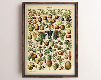 Vintage Fruit Print, Antique French Fruit Poster, Fruit Print, Antique Fruit Print, Antique Botanical Print, Printable Botanical Wall Art