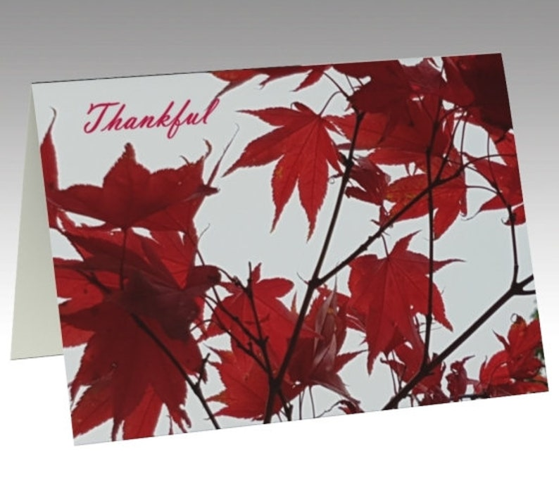 Thanksgiving Photo Art Cards  choose 1 or a Set of 3 1 card only-ship now
