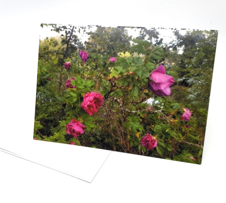 Floral Photo Art Card original photograph Woodland Wild image 0