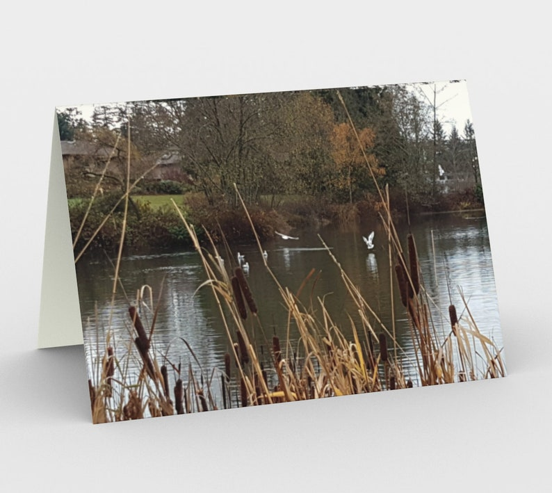 Autumn Photo Art Cards Set of 3 Bul Rushes grasses and 1 card SHIP NOW