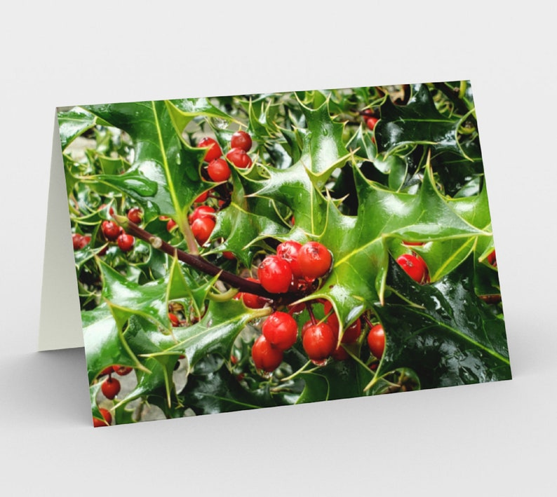 Holly & Berries set of 3 holiday cards from original nature image 0