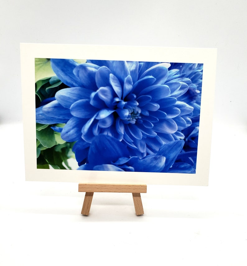 Flower photography art print print or matted print Beautiful 4 x 6 print