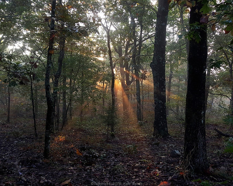 Sunbeams in the Forrest 16X20 Canvas image 0