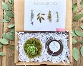Succulent Aloe You Vera Much Friend Gift Succulent Gift Box Soy Candle Gift Send a Gift Box