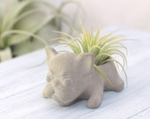 Concrete French Bulldog Air Plant Succulent Planter Small Wedding Favors Home and Office Decor Modern Planter
