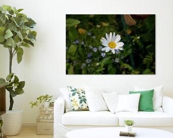 Daisy Fine wall art, Prints, Canvas, Metal.