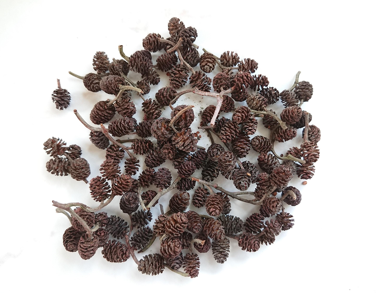 80Pcs Mini Pine Cones Fruits Dried Floral Accents Christmas Decor Ornaments