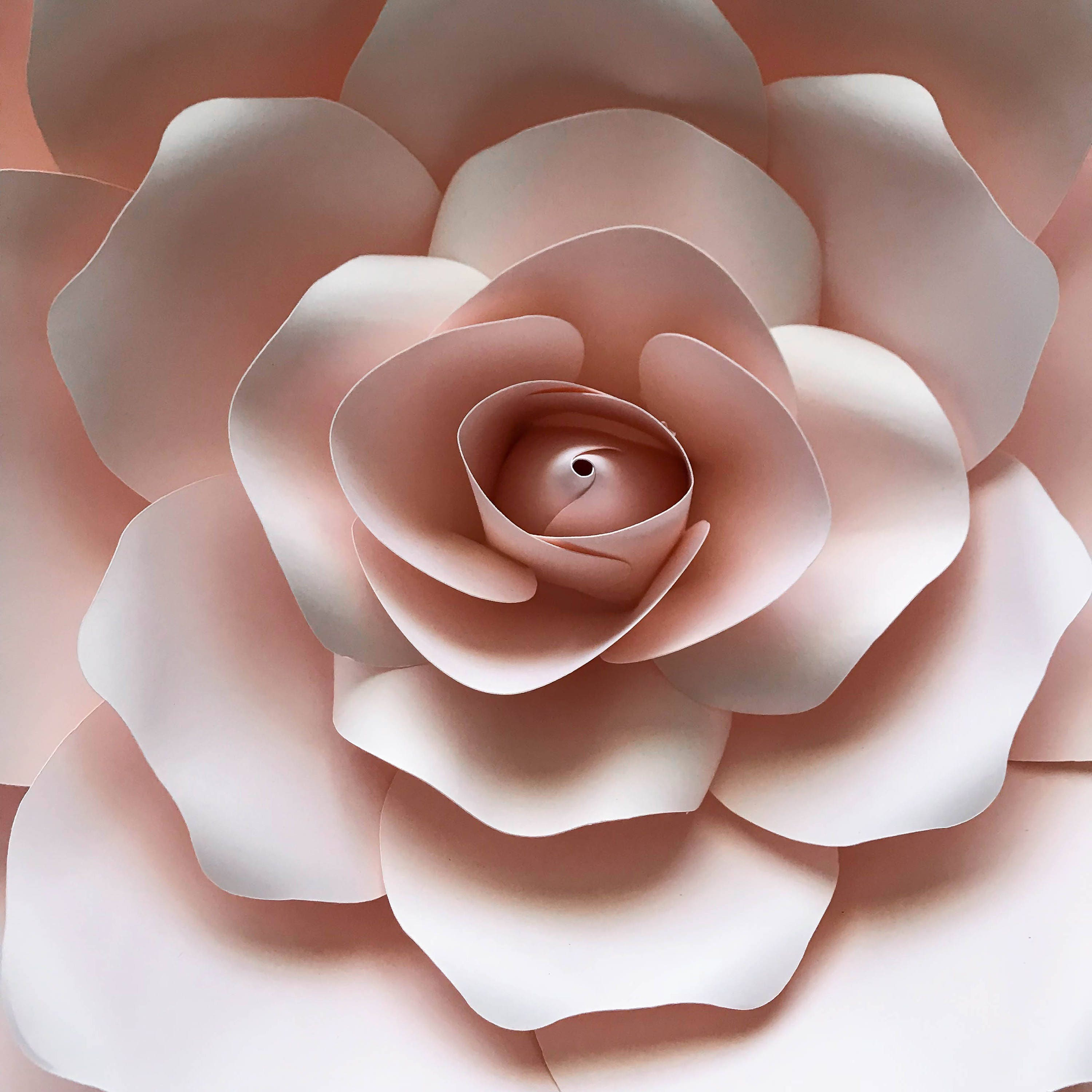 svg png dxf petal 19 cut file template for diy giant paper flowers w   rose bud  bases n flat