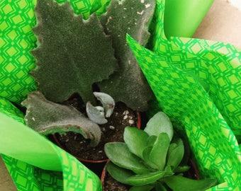 Succulent Gift Box (2)