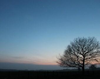 Sunset Tree Silhouette Print