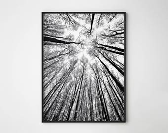 Forest Print, Forest Poster, Nature Print, Forest Photography