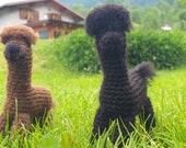 Mini alpaca