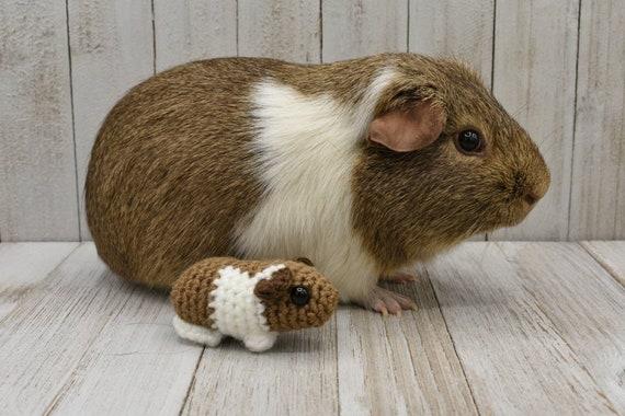 Custom Baby Guinea Pig Memorial Plush Etsy