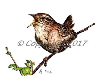 Singing Wren Pen and Watercolour by Katie King