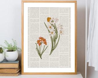 Printable Botanical Wall Art, Vintage Floral Print, Amaryllis Tropical Flower Poster Home Decor, Botanical Bedroom Home Decor, Dorm Wall Art