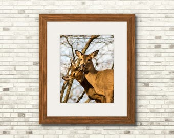 Deer Smooch | Nature Wildlife Photography | 11x14 - FREE SHIPPING!