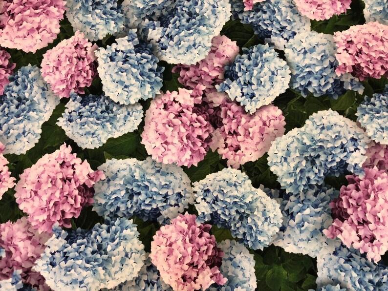 ea52012dfd1f2 Hydrangea cotton fabric. Wisteria cotton fabric. Green floral cotton  fabric. Price for 1.3 meters last piece
